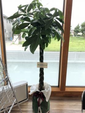 観葉植物と胡蝶蘭